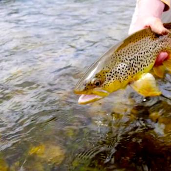 El Sol fly fishing video