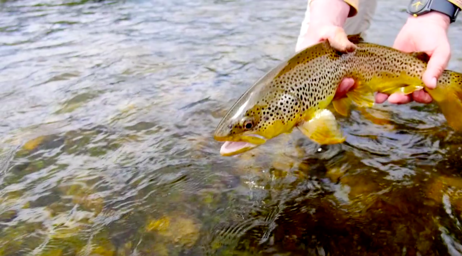 El Sol fly fishing video