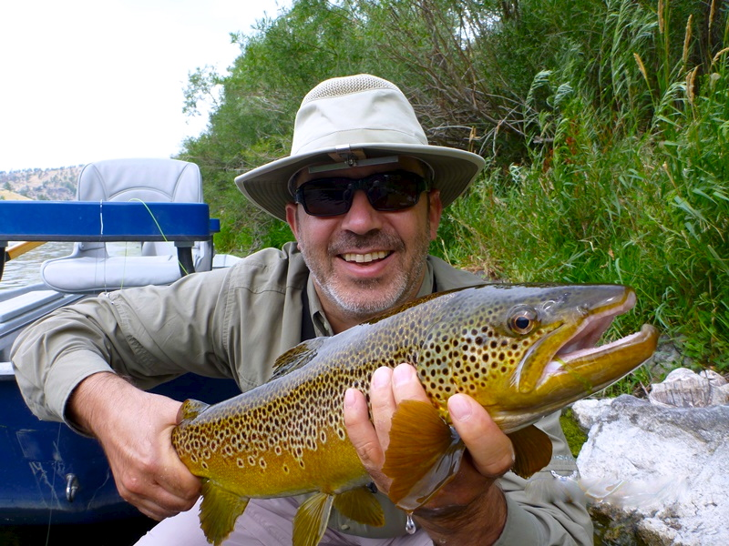 Montana dry fly trout