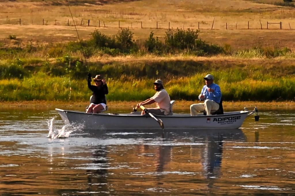 Missouri river montana fishing report for Trout fishing in missouri