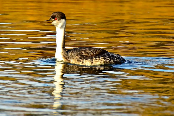 Missouri RIver Birds