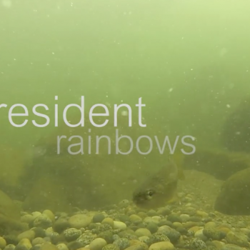 Resident Rainbows