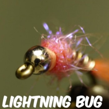 Pink Lightening Bug