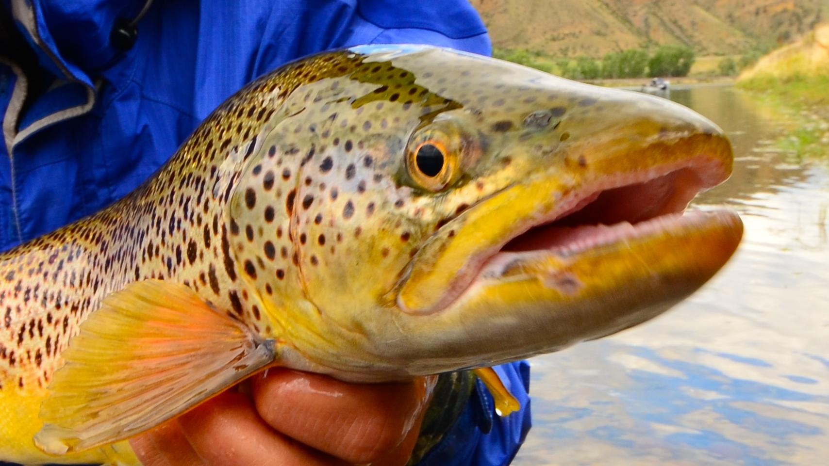 Missouri River Summer Fishing Report