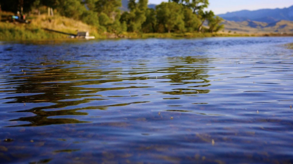 Missouri River Pseudos and Baetis