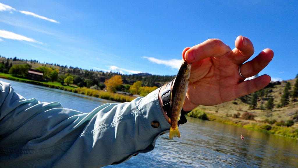 Missouri River Montana Fishing Report 10.8.14