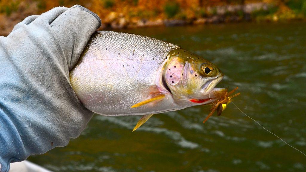 Blackfoot River Fishing Report 6.19.15
