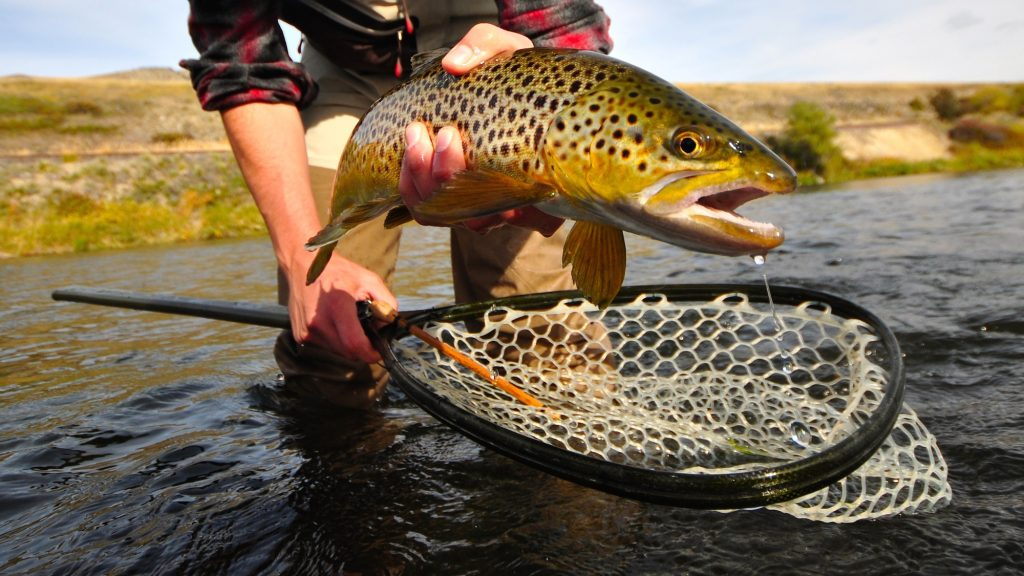 Missouri River Fall Fishing Forecast