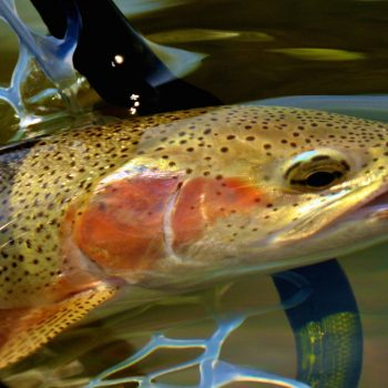 Missouri River Montana Fishing Report 12.3.15
