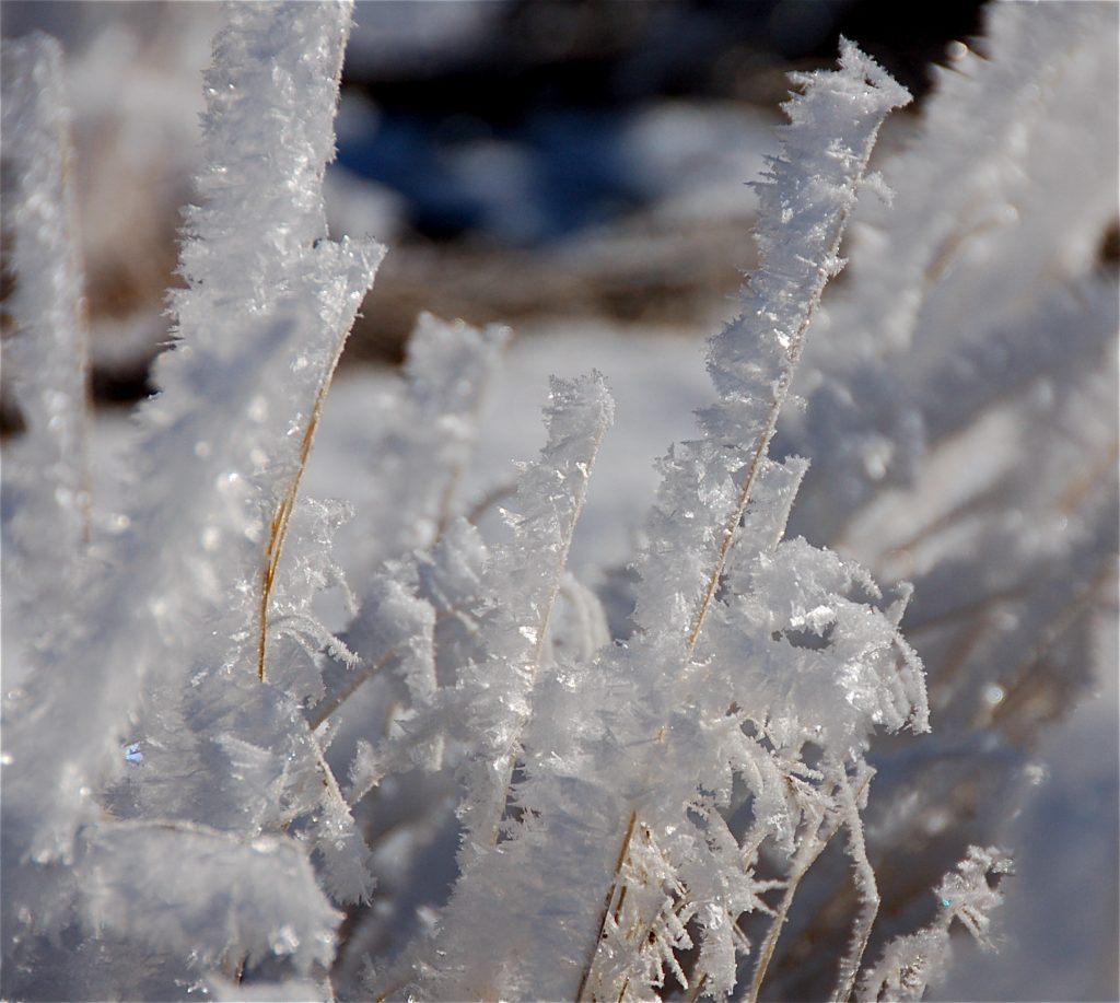 HOAR FROST CLOSE UP WINTER copy