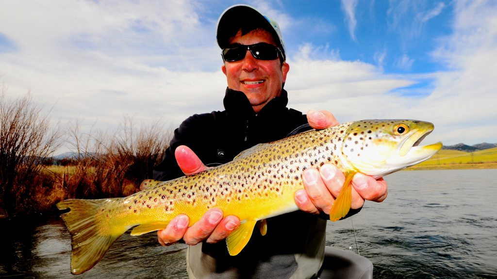 Spring Brown Trout