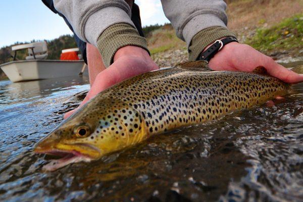 June is done Missouri River Fishing Report