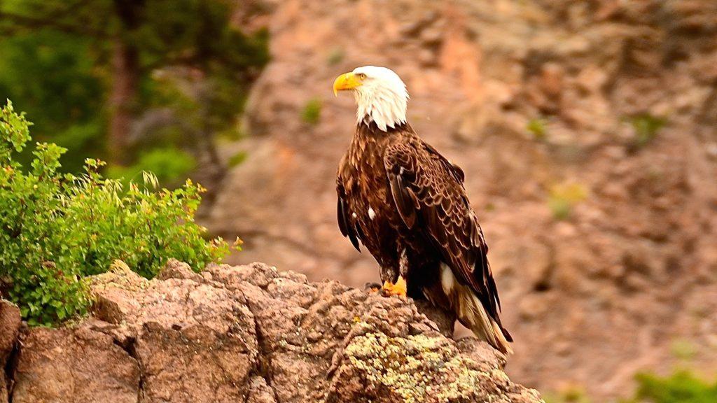 Thursday Eagle Image
