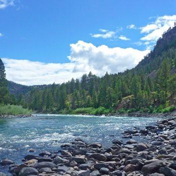 Yellowstone River Fish Kill