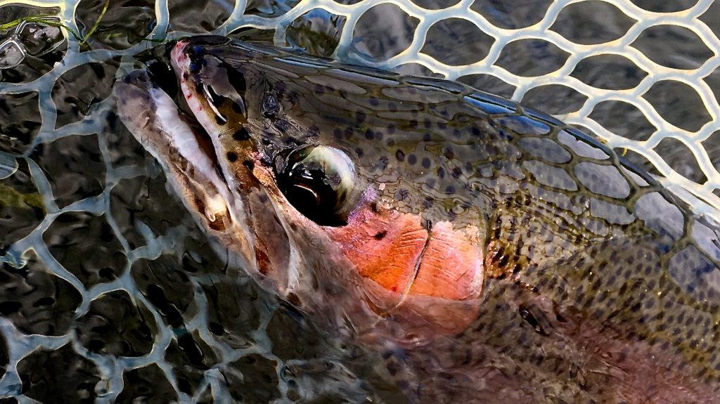 5 Tips for early fall Missouri River Fly Fishing