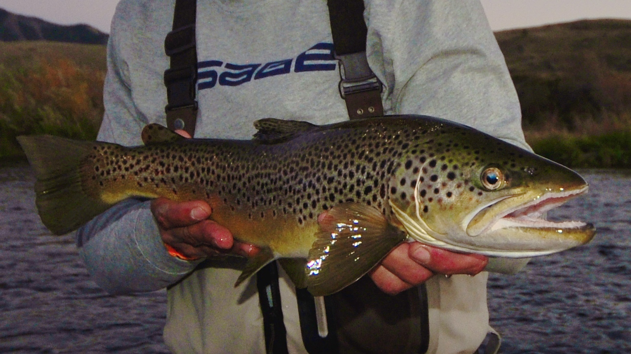 3 Ways to get your hands on Brown Trout