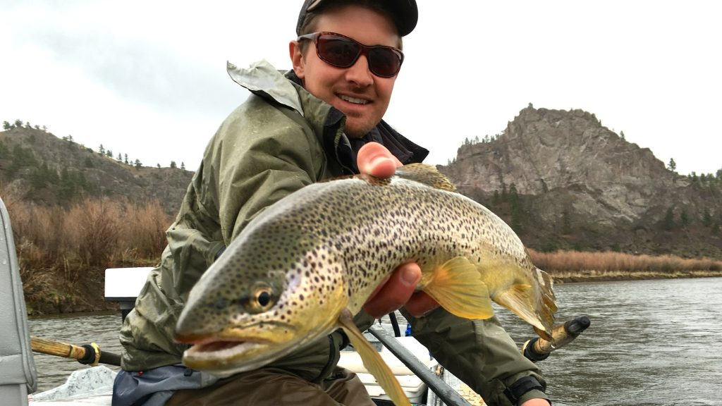 Hump day brown trout headhunters fly shop for Trouts fly fishing reports