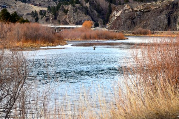 Missouri River Fishing Report March 2nd