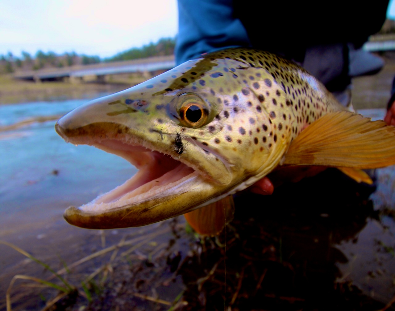 Late April Fishing Report from Headhunters