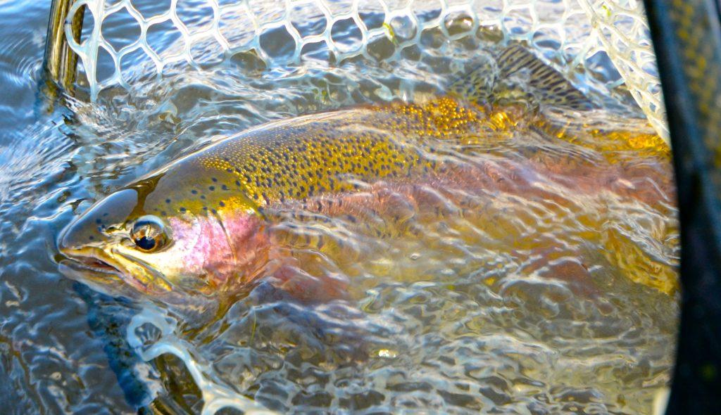 Sunday Fishing Report Quick Hits