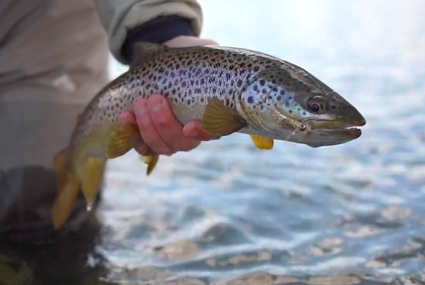 Montana Trout Spey Video
