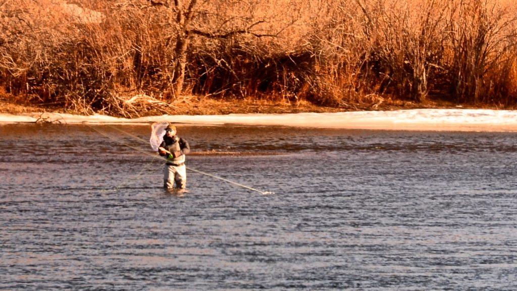 Late January Missouri River Fishing Report