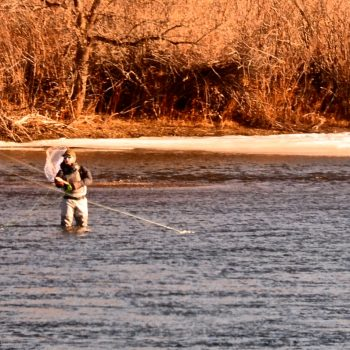 Late January Missouri River Fishing Report