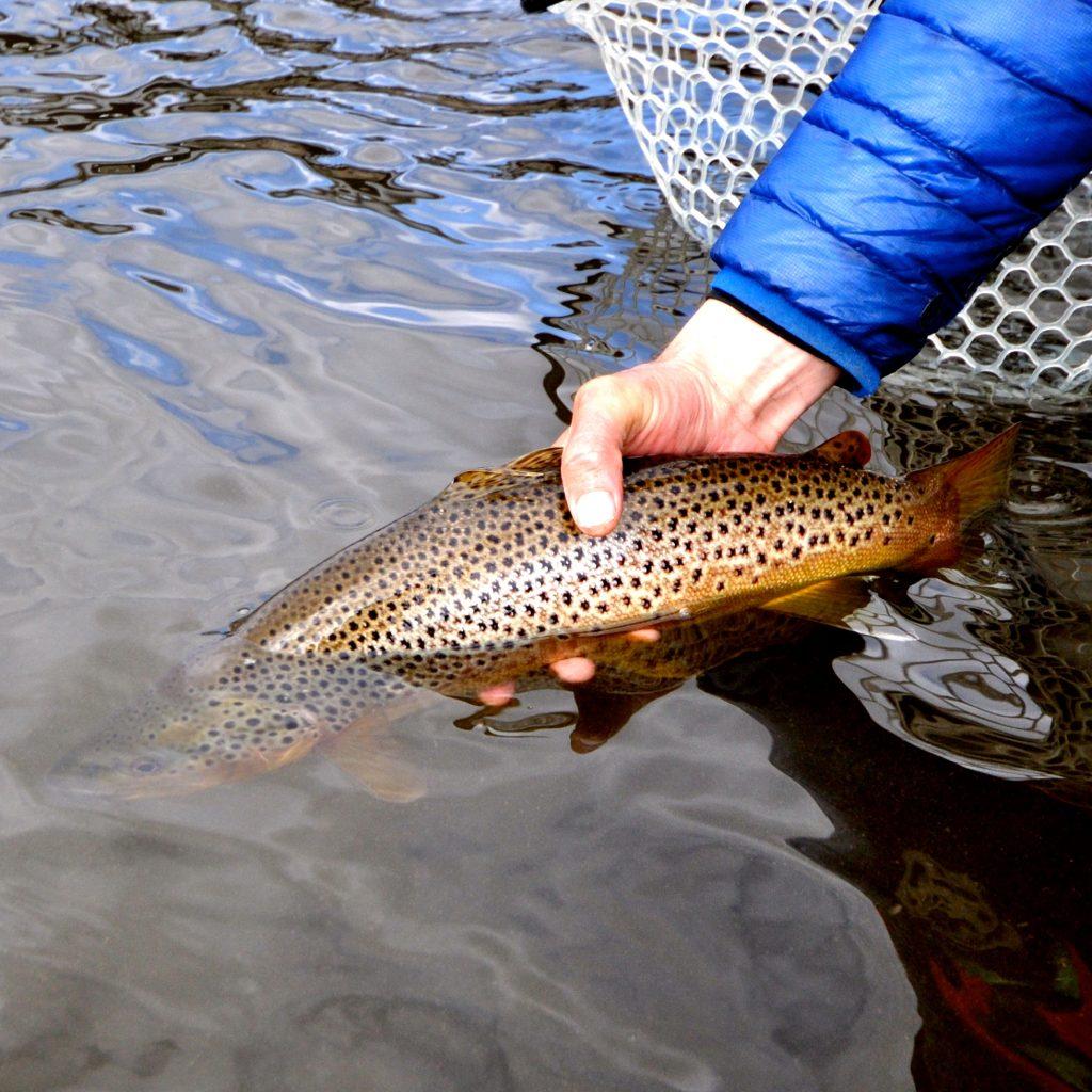 Missouri River Swing Report