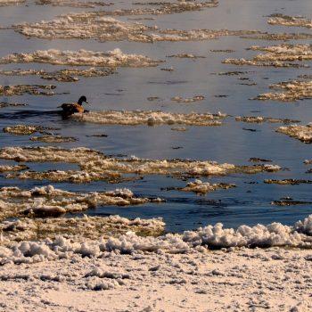 Mid February Missouri River Fishing Report