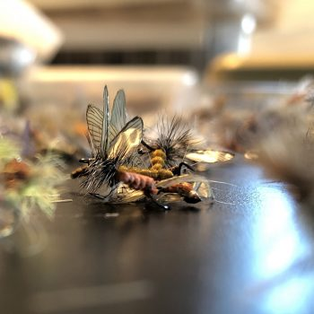Squeeky's Fly Sort Update