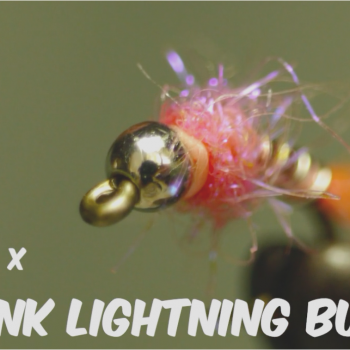 Pink Lightening Bug Video