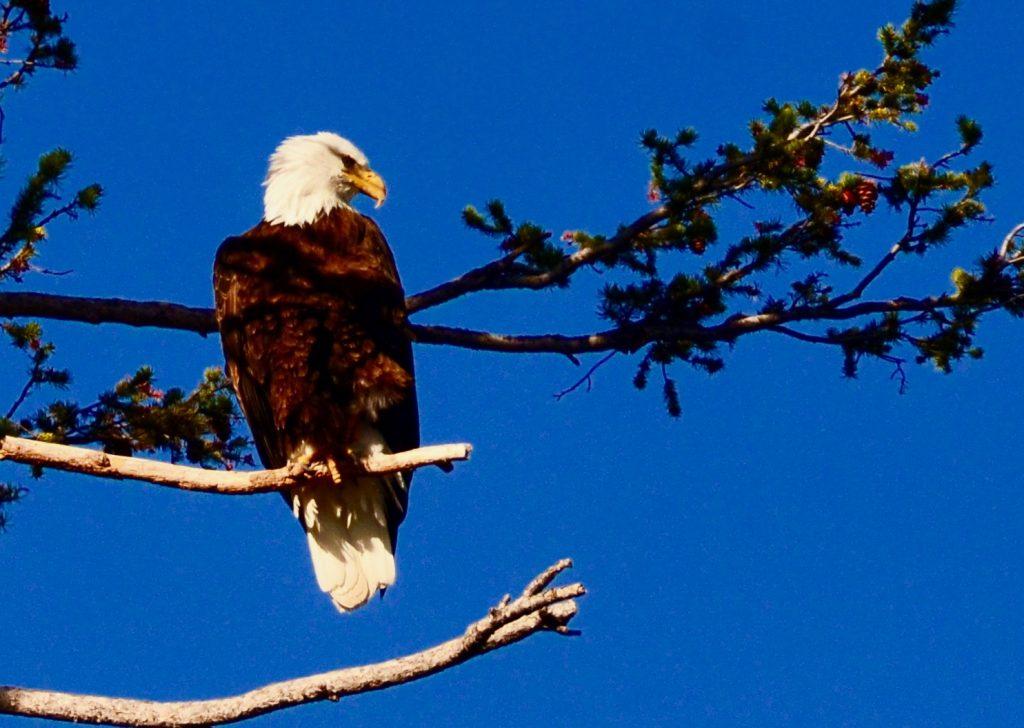 Thursday Eagle Shot