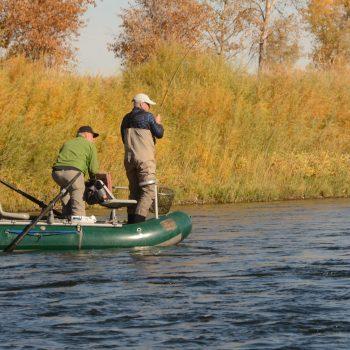 November 8th Missouri River Fishing Report
