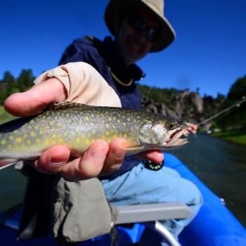 Dearborn River Brook Trout