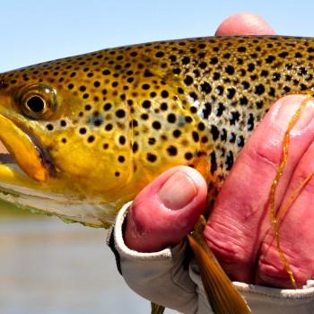 Montana Fishign Report