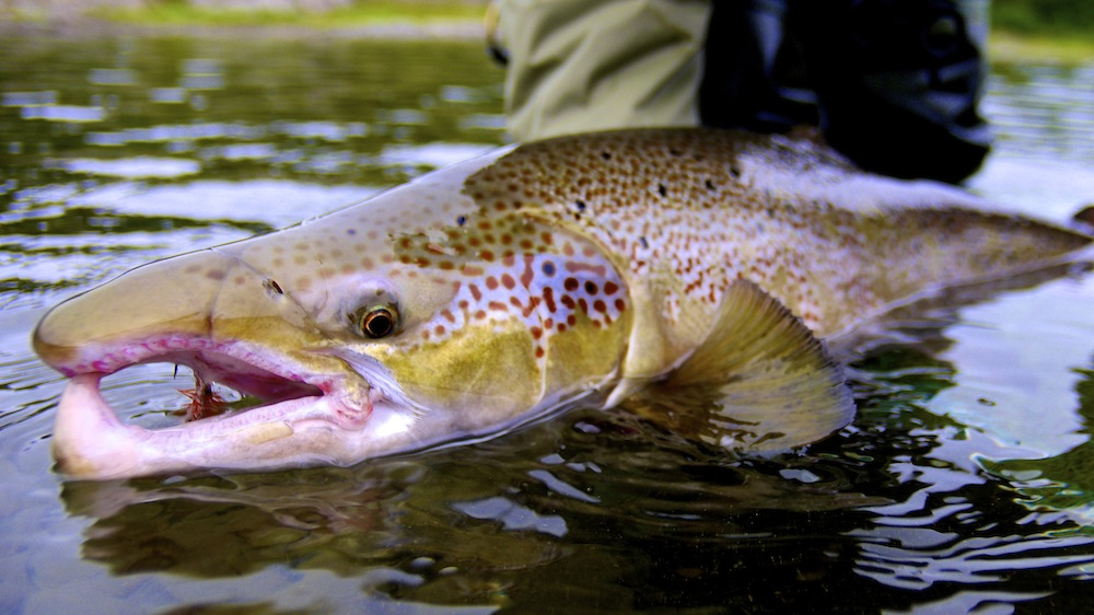 Restigouche River Dry Fly Fishing