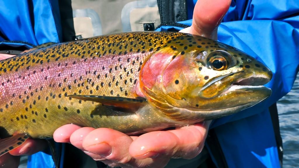 Missoiuri RIver Montana Fishing Images