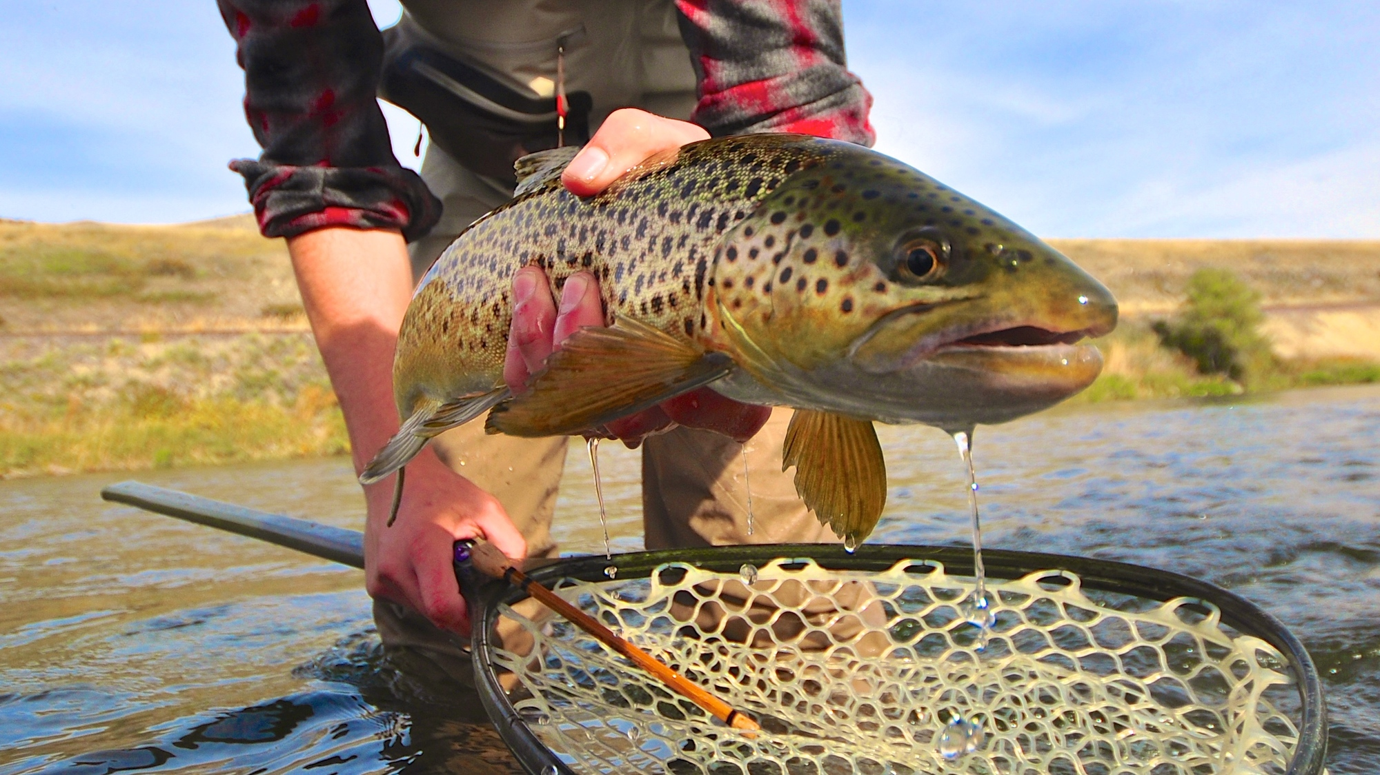 Missouri River Montana Fishing Report 10.27.14