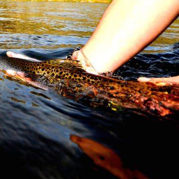 Missouri River Montana Fishing Report 11.5.14