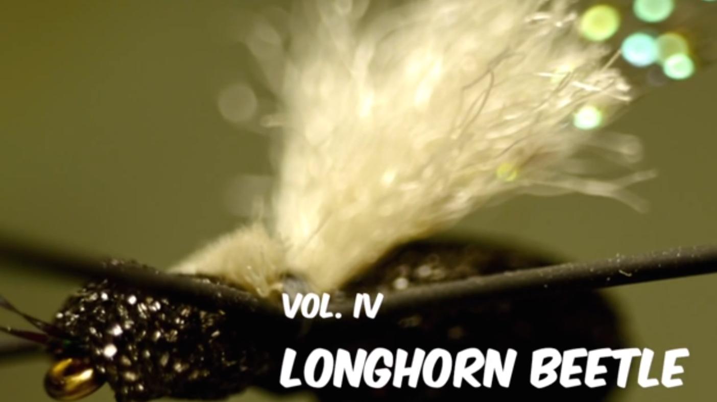 Longhorn Beetle JAV