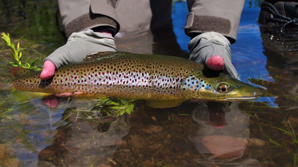 Missouri River Montana Fishing Report 6.5.15