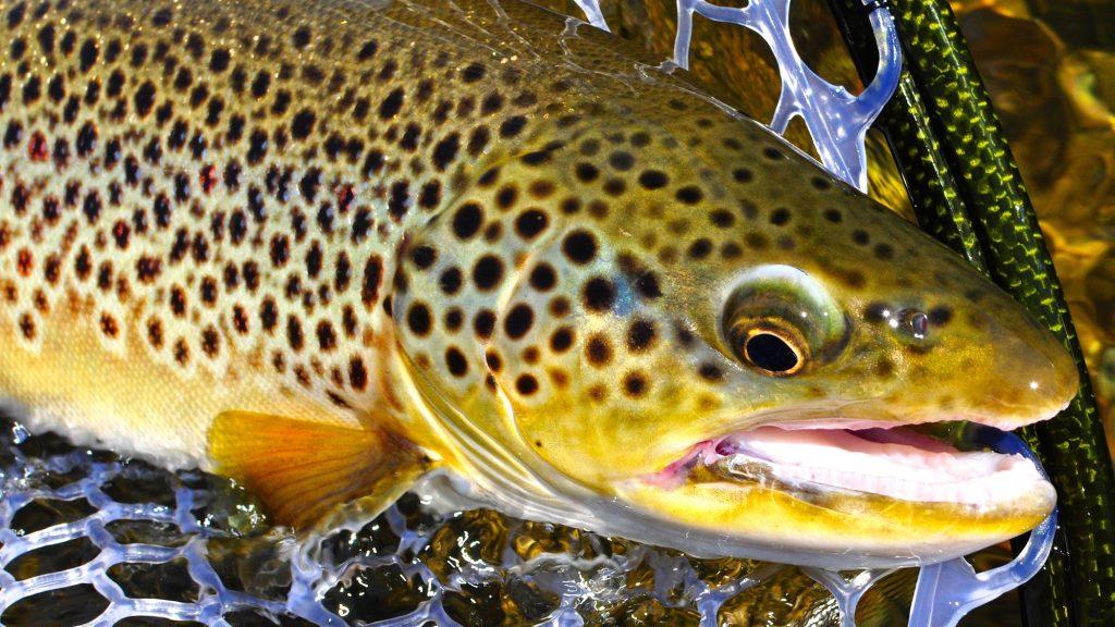 Missouri River Montana Fishing Report 7.30.15