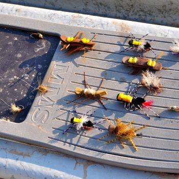 Blackfoot River Montana Fishing Report 7.7.15