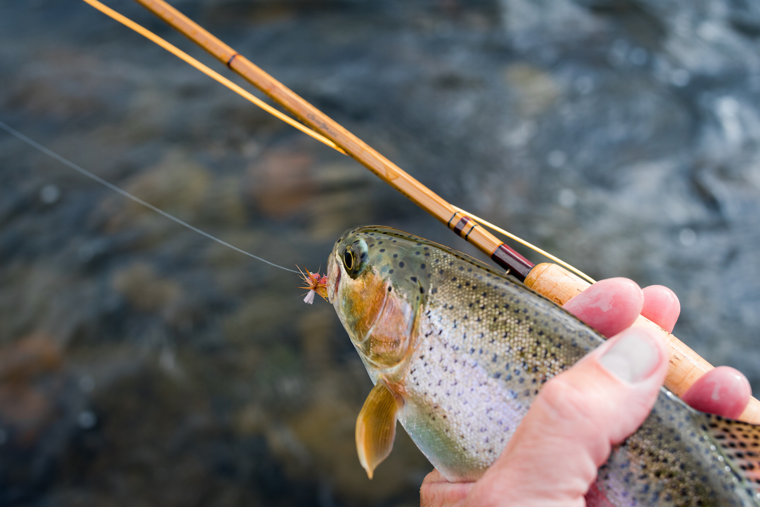 Sweetgrass Rods Madison River