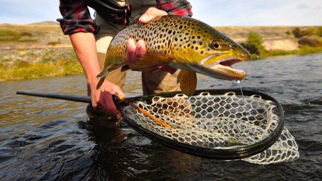 Missouri River Fall Fishing Forecast
