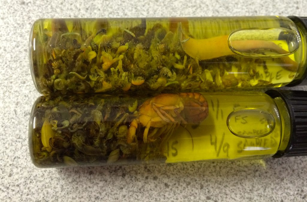The top vial contains a sample taken near Lone Tree FAS. The bottom vial sample was taken near the Cascade FAS.