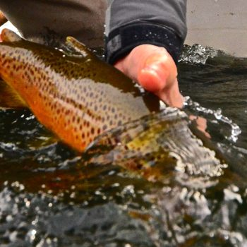 Missouri River November Fishing Forecast