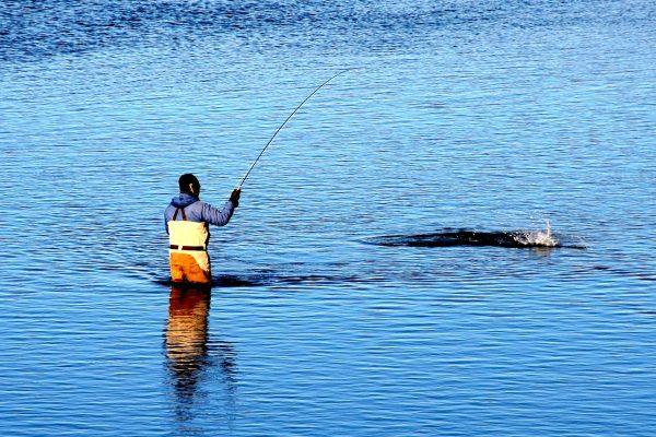 Top 10 tailwater midge flies headhunters fly shop for Best fishing in missouri