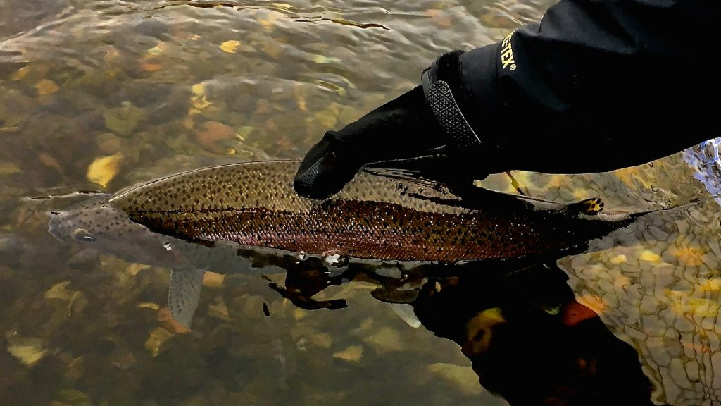 Silly Sunday Scenery Winter Trout Edition