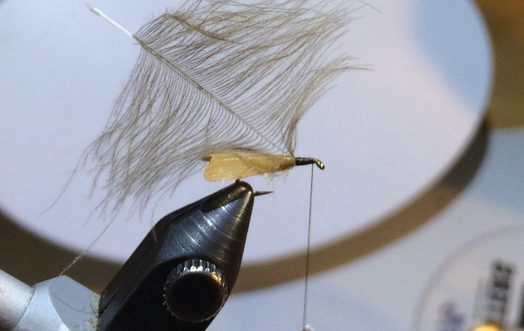 Stockig Wing Caddis_5